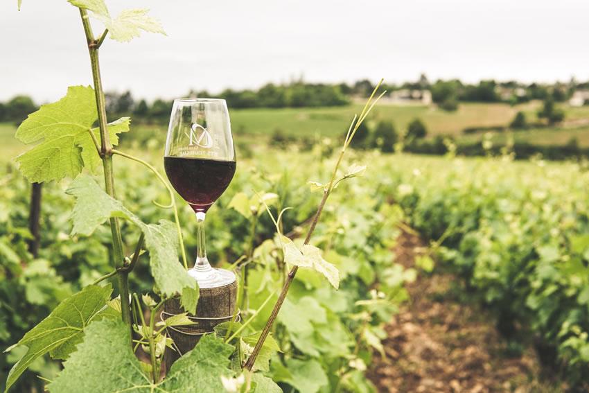 Viticoltura: un finanziamento di 50 milioni di euro per la distillazione di crisi