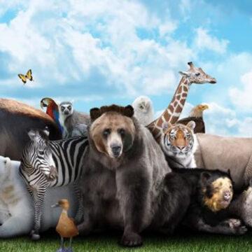 Animalismo e diritti degli animali