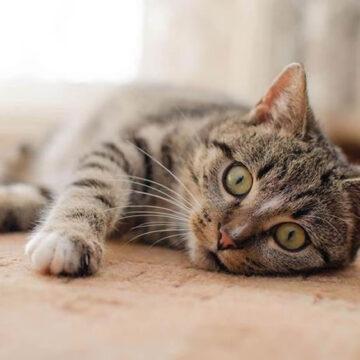 Giornata del gatto: l'appello al governo di veterinari e aziende del settore per i.v.a. agevolata al 10% su prestazioni e alimenti per gatti e cani