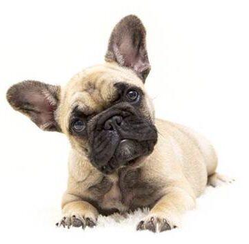 Giornata mondiale del cane: si festeggia, ma si continuano ad abbandonare…