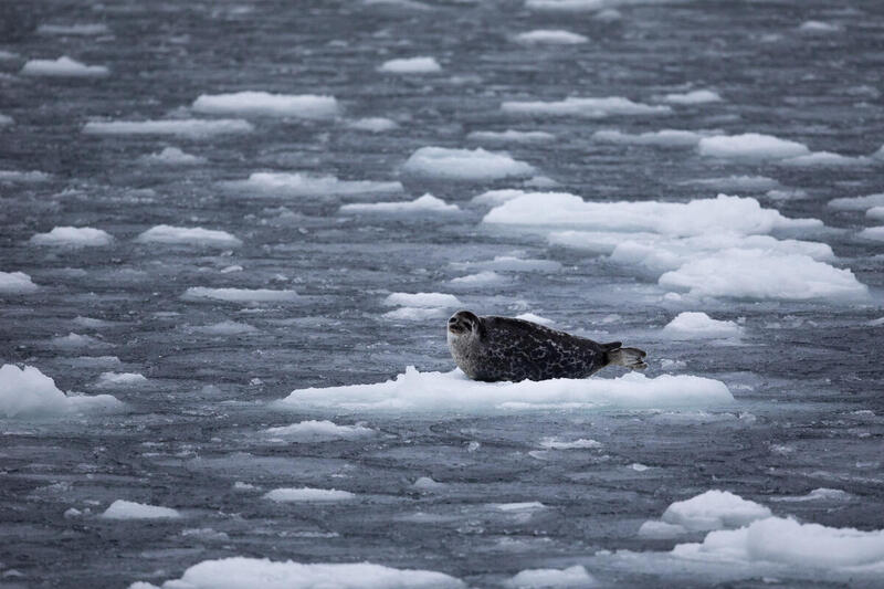 Artico: registrato il secondo dato più basso di sempre del livello di ghiacciaio marino