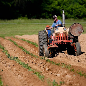 Agricoltura: pronto il riordino del servizio fitosanitario nazionale