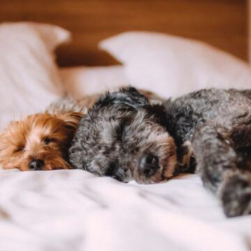 Coronavirus: un cane è risultato positivo in provincia di Bari ma non è contagioso