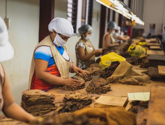 Tabacco riscaldato: Cia, su riforma accise serve tavolo tra istituzioni e filiera
