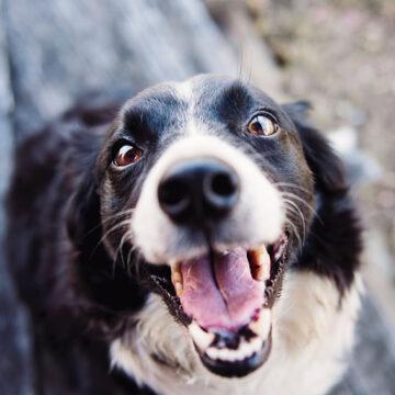 CBD per combattere il cancro dei cani