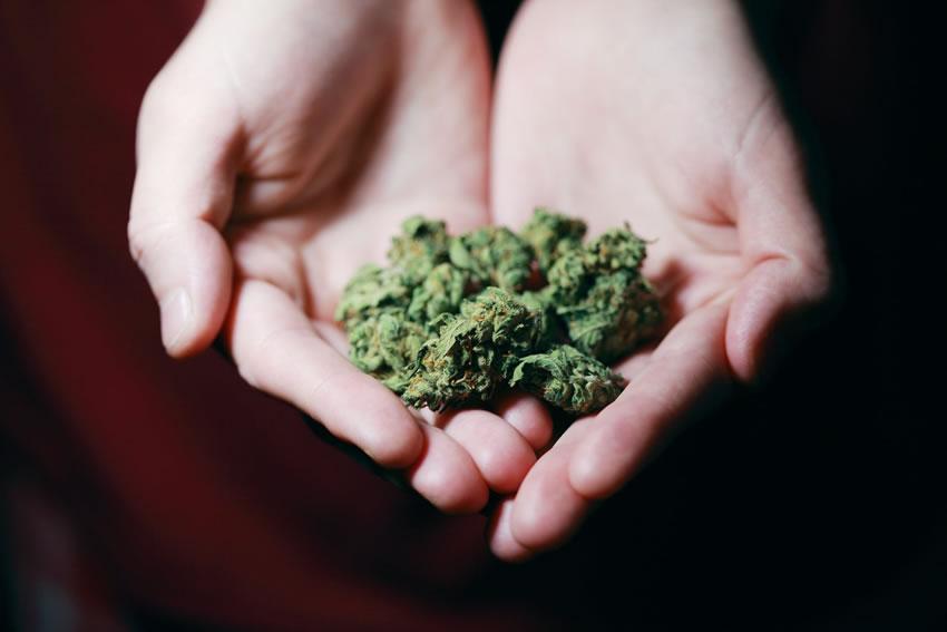 USA – Cannabis terapeutica: è un Complemento e un sostituto degli oppioidi contro il dolore cronico