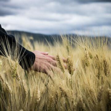 Governo Draghi: agricoltura e aree rurali diventino protagoniste attive del piano di ripartenza