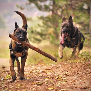 Cani: ecco come si possono ridurre le deiezioni fino al 66%