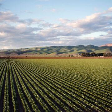 Agricoltura: la riforma del servizio fitosanitario è legge