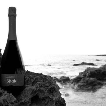 """Incontri: a Pantelleria con Francesco Rizzo per conoscere l'Azienda vinicola """"Vinisola"""""""
