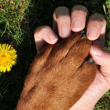 Cani da assistenza: non esistono motivi per vietarne l'accesso negli ospedali