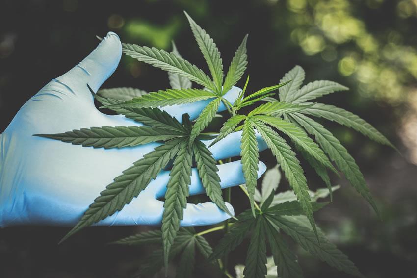 Cannabis e HIV: uno studio canadese conferma che migliora la qualità della vita